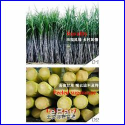 110V Electric Sugar Cane Ginger Juice Extractor Press Machine Stainless Steel